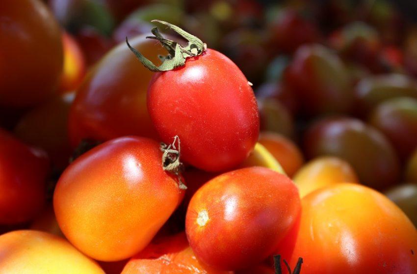 Contribuye Sedapa con la seguridad alimentaria de las y los oaxaqueños
