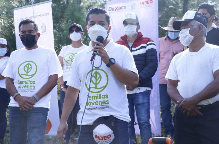 Reforesta Injeo y jóvenes de Miahuatlán la localidad de San Miguel Yogovana